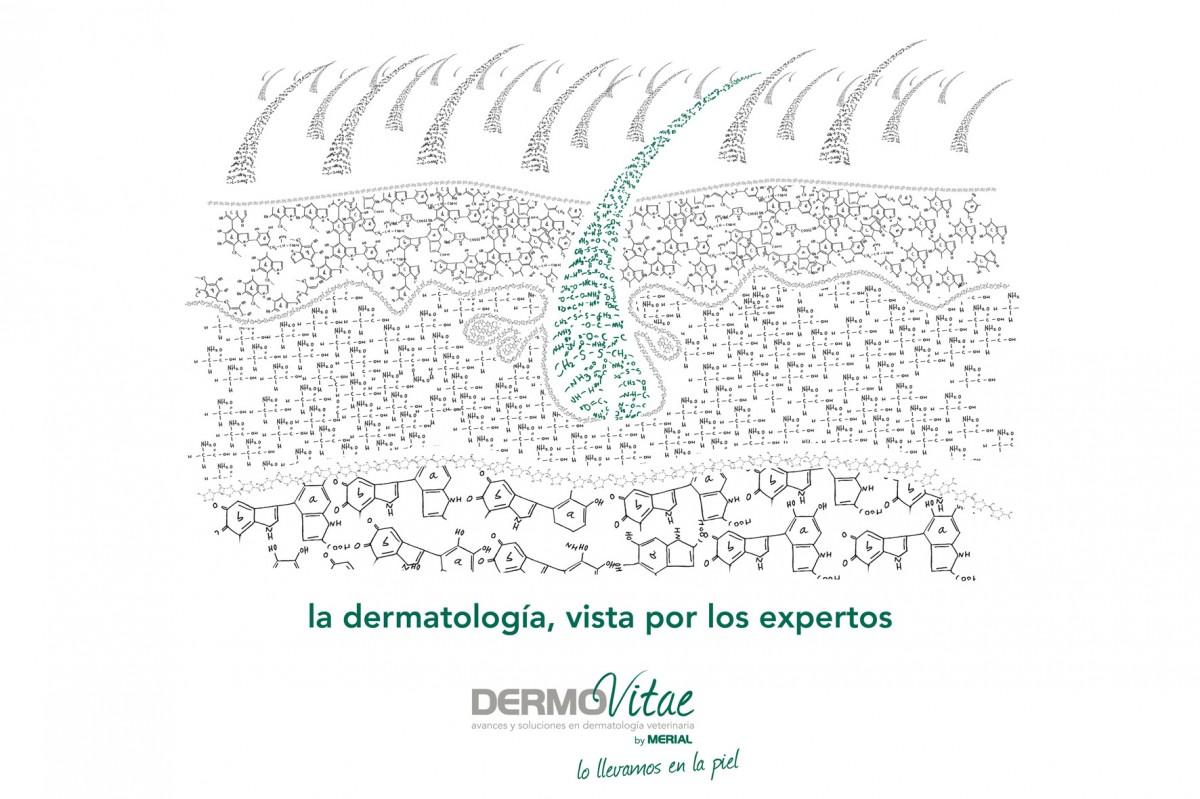 2 DermoVitae